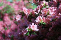 L1008733 (LaBonVampire) Tags: leica flowers nature zeiss carlzeiss zm leicam8 teletessart485 teletessar85