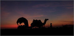 Pushkar - Sunset (VadiveluTT) Tags: sunset india camel pushkar rajasthan pushkarfestival canonflickeraward
