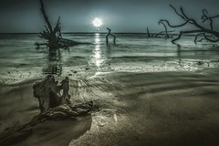 Boneyard Beach (tshabazzphotography) Tags: beach boneyard big talbot island jacksonville florida tropical driftwood trees old tress fallen sunrise lovers sun ocean water bright sand canon official photos canonphotos canonoffical barrierislands filter ig photographer amateur lovetoshoot