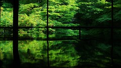 Green Reflection (maco-nonchR) Tags: abstract reflection green window leaves composition table kyoto pattern place geometry symmetry  ohara lovely magical  yase  ractangle  rurikoin  ractanglar