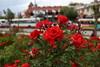 IMG_1891 (furkandindar) Tags: plants plant flower rose gül konya çiçek iconium