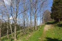 salendo al Priafor (Tabboz) Tags: panorama primavera erba montagna strade cima prati vetta pascoli prealpi fioriture