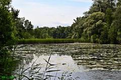 DSC_0257n wb (bwagnerfoto) Tags: lake nature water landscape nationalpark wasser outdoor teich landschaft t tjkp lobau vz donauauen