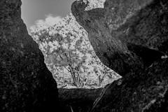 White Tree (rod.hokpicture) Tags: tree monochrome rock nikon rocks rvore pretoebranco rochas monocromtico d3100