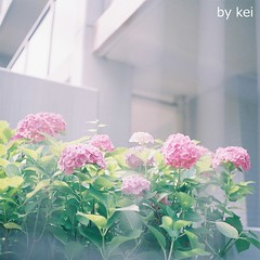 . (k) Tags: film hasselblad500cm fujipro400h