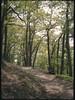 09.05.2016 | Imsbach (-masru-) Tags: film 35mm 135 kamera wanderung canondemi kleinbild eisenweg imsbach agfaphotovistaplus200