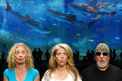 Fishface at the Okinawa Aquarium (Studio d'Xavier) Tags: werehere fishfacefriday fishface aquarium okinawa isadora marynell whalesharks 365 june102016 162366 blue