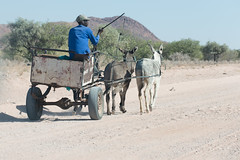 Donkey cart (David Thyberg) Tags: africa nature 2016 donkey animal namibia equusafricanusasinus sna khorixas kunene people