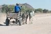 Donkey cart (David Thyberg) Tags: africa nature 2016 donkey animal namibia equusafricanusasinus åsna khorixas kunene people
