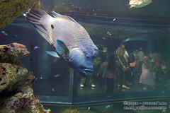 DSC_8411 (slamto) Tags: australia sydneyaquarium sydneysealifeaquarium fish