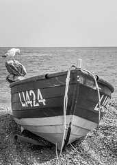 It's a fishing boat - so where are the fish? (D1g1tal Eye) Tags: sea sky blackandwhite bird monochrome coast boat fishing nikon marine gull tamron f28 1750mm d7000