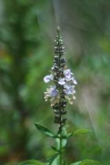 Wild Flower (bamboosage) Tags: m42 19 meyer 58 preset optik gorlitz primoplan