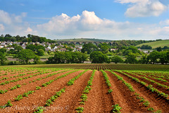 St Germans Vista. (pedro2324) Tags: lines st landscapes cornwall farming scenic viaduct fields agriculture germans undulating ploughed