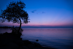 COTTAGE SERIES (blink to click) Tags: background beach blue bluehour calm canada clouds cottage cottagelife georgina horizon keswick lake lakesimcoe leaves night ontario peaceful purple relax relaxation rocks serenity shore shoreline silhouette skies sky sunset tranquil tree treetrunk trunk view wallpaper water