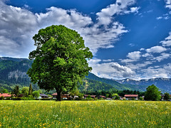 Home sweet home Bavaria (W_von_S) Tags: sky panorama mountains alps flower tree green grass clouds germany landscape bayern deutschland bavaria spring outdoor sony meadow wiese himmel wolken blumen berge alpine gras grn alpen paysage landschaft baum paesaggio tegernsee werner frhling 2016 scharling alpinepanorama wvons alpha7rm2 homesweethomebavaria