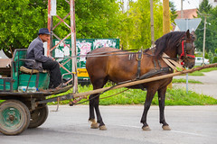 Horse-drawn. (mathematikaren) Tags: horse man village carriage serbia balkans cart easterneurope vojvodina donauschwaben ravnoselo schowe vojvodenia