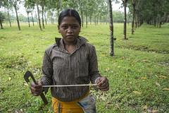 Srimangal-6304 (BohemianTraveler) Tags: asia tea bangladesh srimangal srimongol sreemangal