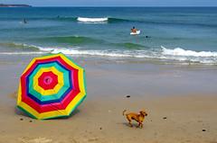 a day at the beach (uteart) Tags: ocean dog beach umbrella mexico fun colorful waves turquoise aquamarine bahiadebanderas puertovallarta puntademita amapas utehagen uteart adayathebeach olympusomdem5 copyrightutehagen2013allrightsreserved puertovallartabahiadebanderasjalisco