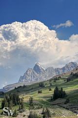 crest_trail_61 (StephenWilliDesigns) Tags: mountains hiking backpacking wildflowers wyoming tetons grandtetonnationalpark tetoncresttrail