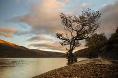Firkin Tree (revisited) (Caledonia84) Tags: tree landscape bay scotland nd 1855mm trossachs lochlomond cliche lonetree millarochy firkinpoint mirrorless sonynex5r