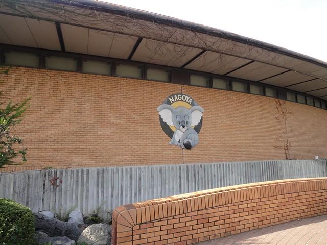 東山動物園一の人気者:コアラ舎へ|名古屋市東山動植物園