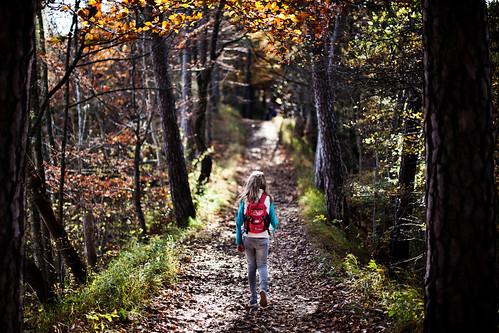 autumn trees childhood forest walking kid hiking path... (Photo: Chrisnaton on Flickr)