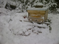 A National hive in Snow