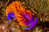 nudibranch2Sept13-13