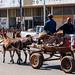 Donkey cart in Mokopane