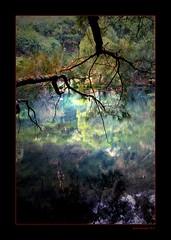 Down By The Water (Seeing Things My Way...) Tags: light lake reflection tree water pond bush branch australia caves nsw twig stick waterhole reflexions bushland jenolan jenolancaves