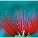 Fleur festive - Festive flower ( fleur artifice-cielle)