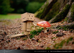 danbo_120 (iskandarbaik) Tags: park uk autumn trees england tree cute home forest toy photography leaf woods bokeh outdoor manga cardboard autumnal yotsuba danbo danbooru revoltech danboard cardbo danboru