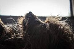 Lola`s World (PabloDiazdeValds) Tags: dogs animals perros