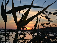 Sunset over the Fleet (Victoria Rowe Photography) Tags: sunset summer dorset weymouth summerevenings thefleet chickerell summersunsets august2013 eastfleetfarm