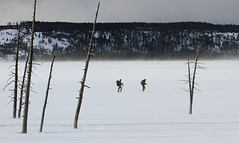 Bison researchers skiing across Fountain Flats (YellowstoneNPS) Tags: nationalpark yellowstonenationalpark yellowstone