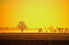 See the light (Tobi_2008) Tags: trees sky color field alberi sunrise germany deutschland saxony feld himmel ciel arbres sachsen tobi farbe bäume sonnenaufgang allemagne germania acker mygearandme
