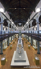 Hunterian Museum (DMeadows) Tags: panorama history vertical museum fossil scotland hall university display glasgow exhibit displays stitched exhibits hunterian davidmeadows dmeadows davidameadows dameadows