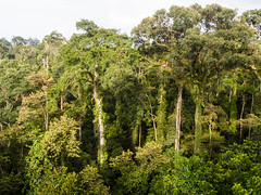 Dipterocarp Forest at Danum Valley (Mike Prince) Tags: trees malaysia borneo forests sabah plantsandflowers danumvalleyconservationarea natureandenvironment