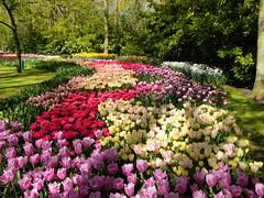 Keukenhof ... (Kindergartenkinder) Tags: park blumen frühling keukenhof tulpen 2014 lisse kindergartenkinder