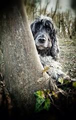 Hide and Seek featuring Otis (Photo Gal 2009) Tags:
