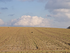 Wintersaat / Winter Seed (schreibtnix on' n off) Tags: blue sky white tree nature field clouds germany deutschland horizon hill natur himmel wolken blau baum horizont acker furrow hgel weis bergischgladbach furc