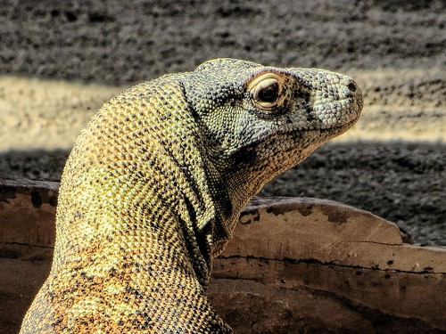Proud to be a Komodo