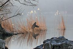 Il pescatore (FM54TO) Tags: lake lago fisherman piemonte pescatore avigliana lagopiccolo bestcapturesaoi elitegalleryaoi