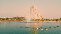 2014-11-12 03.39.09 2 (massoudasadi11) Tags: park duck suny  abo   atash    aboatash