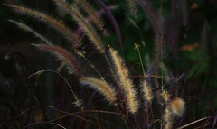 The Beauty of a Slow Walk (Violet aka vbd) Tags: autumn fall grass botanical fallcolor pentax bokeh connecticut newengland ct explore lightandshadow k3 trumbull 2014 vbd smcpentaxda55300mmf458ed fall2014