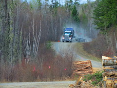 """Empty in the East rd at 56km"" (jr-transport) Tags: ontario icon logger custom heavy kenworth w900 w900l cedarnarrows icon900"
