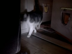 20160522-204349-i-1 (Catflap central) Tags: cat catdoor katzenklappe raspberry pi camera cats catflap kattenluik catflapj2nnl pet meow