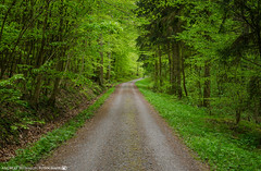 Spring in the Forest 2. (andreasheinrich) Tags: trees green forest germany deutschland spring colorful path april grn wald bume weg frhling badenwrttemberg farbenfroh dahenfeld nikond7000
