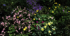 Joy Of Colours (AnyMotion) Tags: flowers plants nature floral colors garden colours frankfurt natur blossoms pflanzen blumen variety rockgarden garten farben blten 6d steingarten 2016 anymotion vielfalt canoneos6d nikcollection