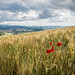 Tuscany in red - Volterra, Pisa - Landscape photography